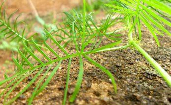 insectes dans le terreau, insectes terre,