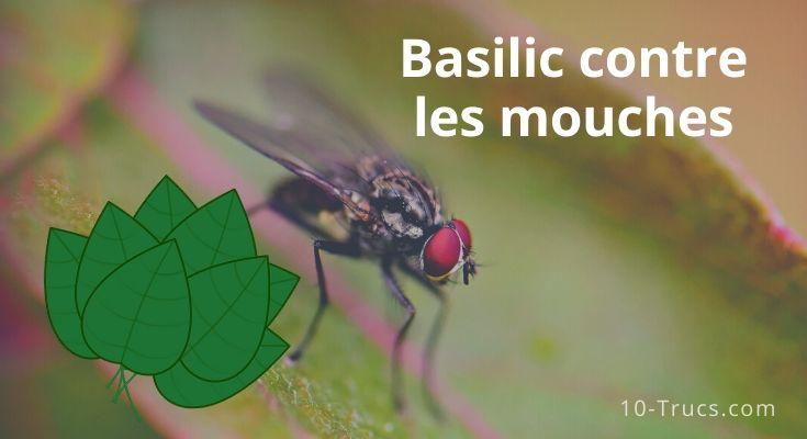 Le basilic contre les mouches