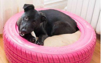 lit pour chien, coin repos pour chien,