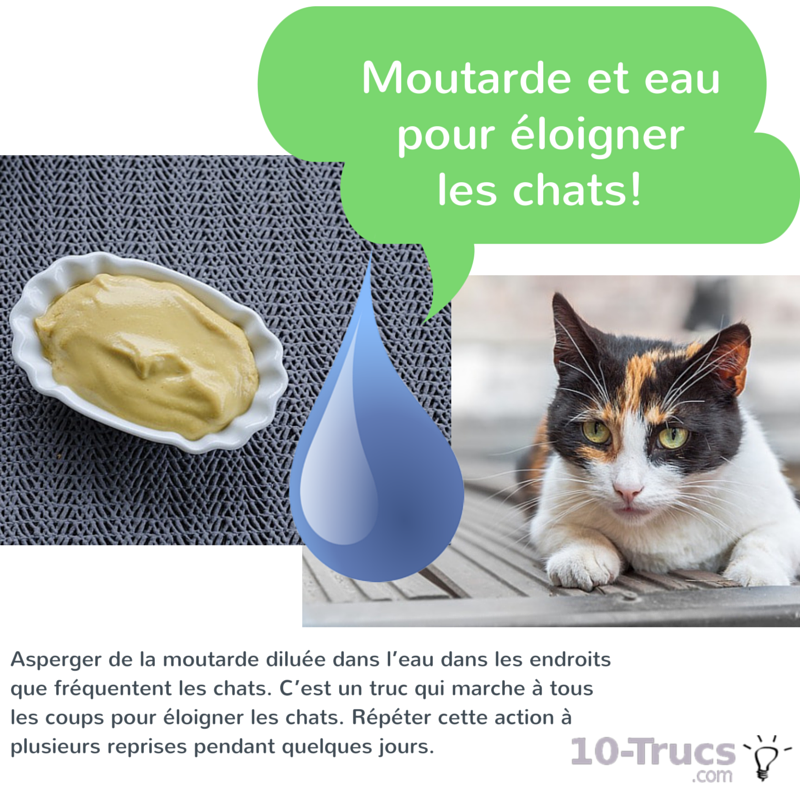 moutarde contre les chats, moutarde anti chat,