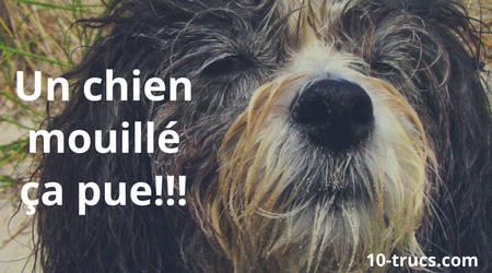 odeur de chien mouillé dans la maison