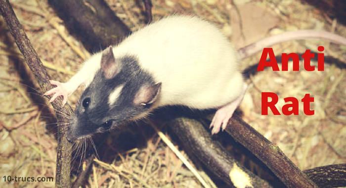truc contre les rats, anti rats,