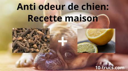 recette maison anti odeur de chien dans la maison