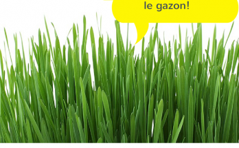 semer gazon en avril, faire pousser gazon printemps,