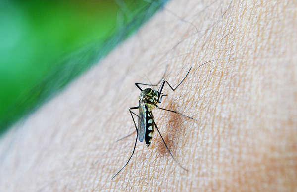 truc anti moustique