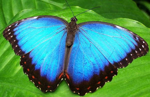 attirer les papillons, avoir plus de papillons,