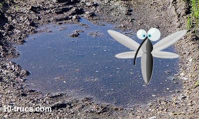 moustiques et eau stagnante sur un terrain
