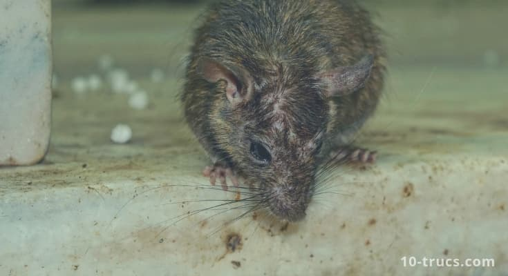 anti rat r pulsif pour chasser les rats. Black Bedroom Furniture Sets. Home Design Ideas