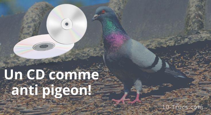 Un CD comme anti pigeon