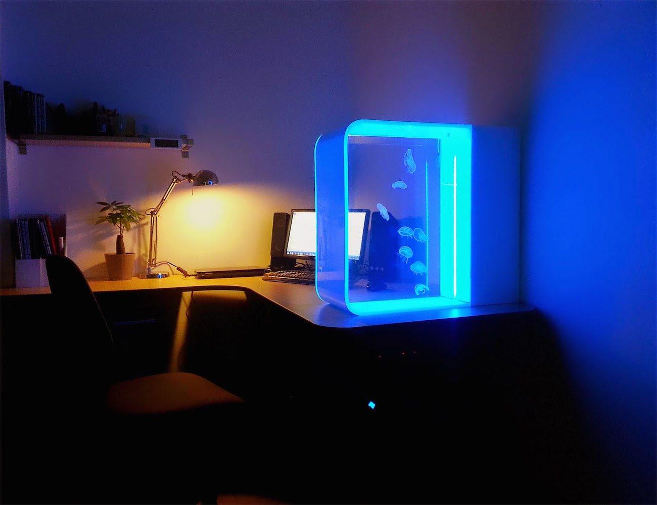 aquarium méduse fluorescente, lumière fluorescente méduse,