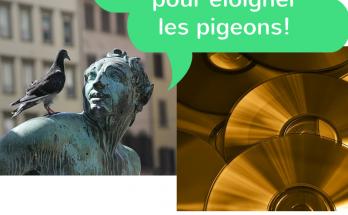 cd aanti pigeon, cd éloigner les pigeon,