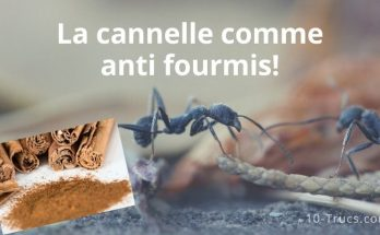La cannelle , un anti fourmis efficace