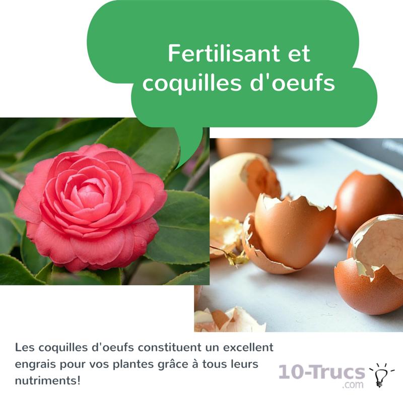 coquilles d'oeufs fertilisant, engrais coquille d'oeuf,