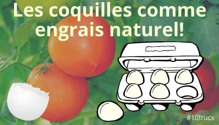Faire un engrais avec des coquilles d'œufs