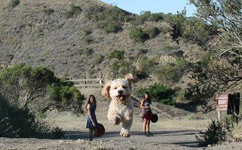 illusion optique gros chien, photo illusion gros chien,