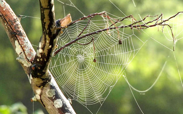 anti araignée naturel