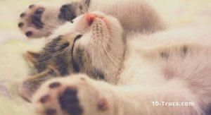 bébé chat mignon