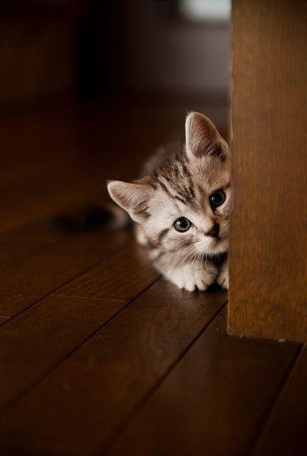 chat qui se cache,