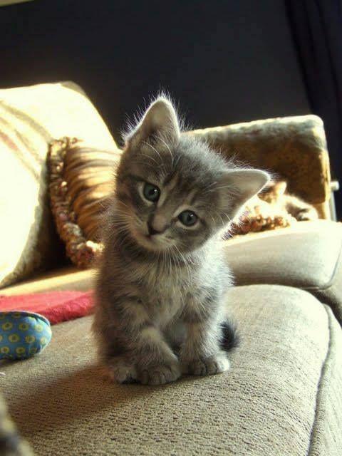 Des b b s chats tout mignon - Chat tout mignon ...