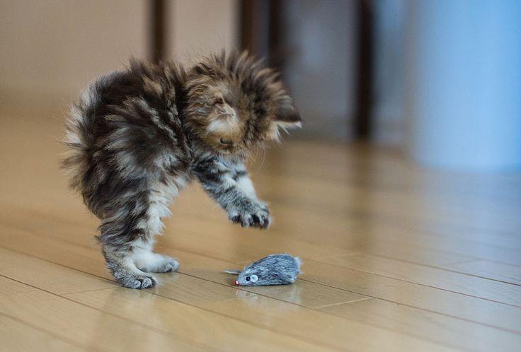 cute cats,