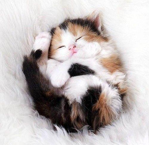 petit bébé chat dodo,