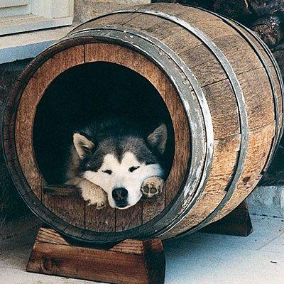 niche pour chien tonneau de vin