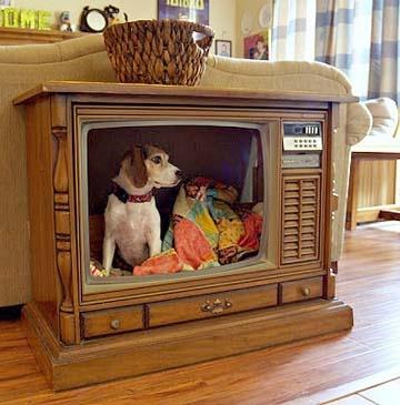 Lit pour chien dans une vieille télévision
