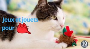 Fabriquer des jeux et jouets pour chat