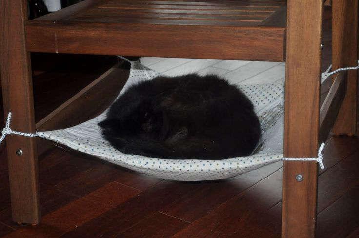 Un hamac pour un chat
