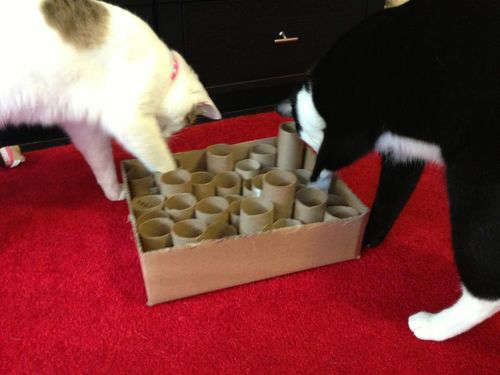cacher de la nourriture pour amuser un chat