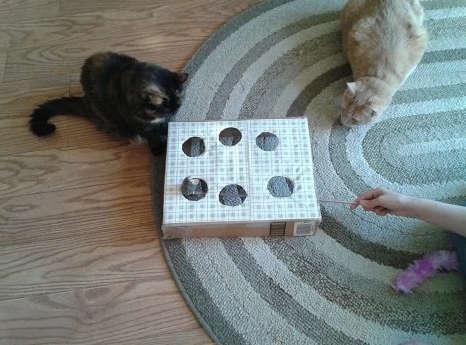 Jeux pour chat avec une boite de carton