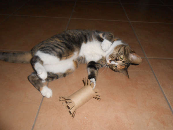 jouet en carton pour chat