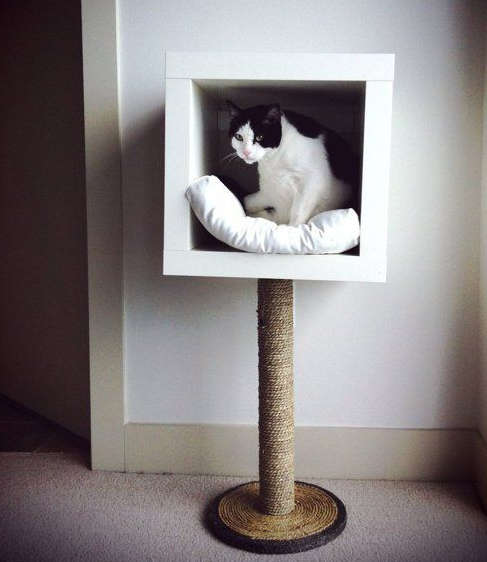 A cubic wooden cat bed