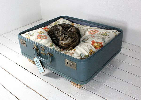 A cat bed in a suitcase