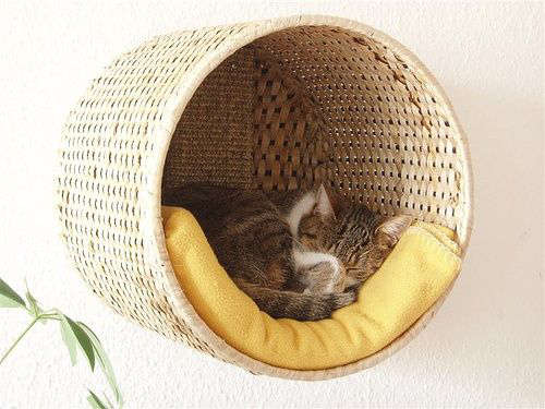A wicker basket for cats