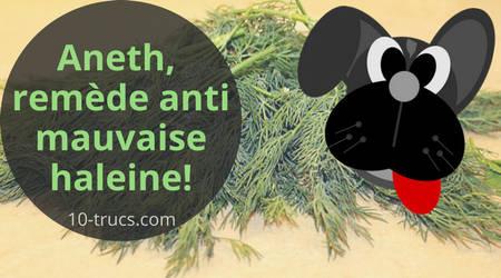 aneth comme remède naturel contre la mauvaise haleine de son chien