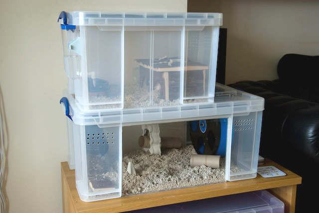 cage pour hamster dans un bac de plastique