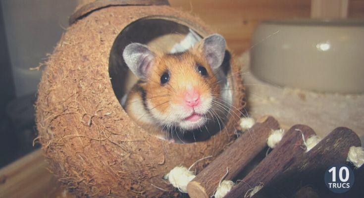 fabriquer une cage et maison pour son hamster