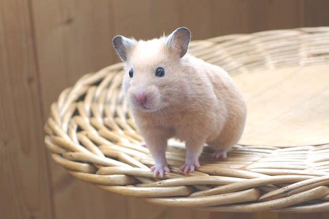 Une maison pour hamster