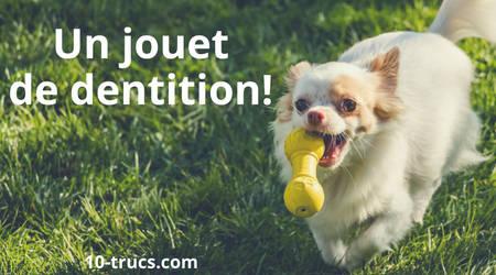 Jouet de dentition contre la mauvaise haleine du chien
