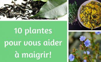 10 plantes pour maigrir