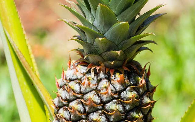 manger un ananas pour maigrir