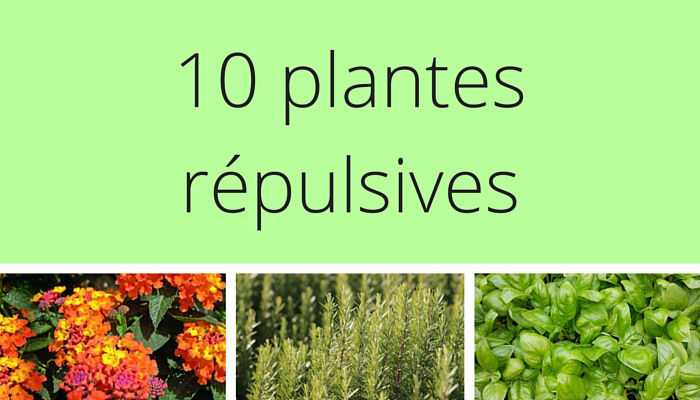 plantes répulsives