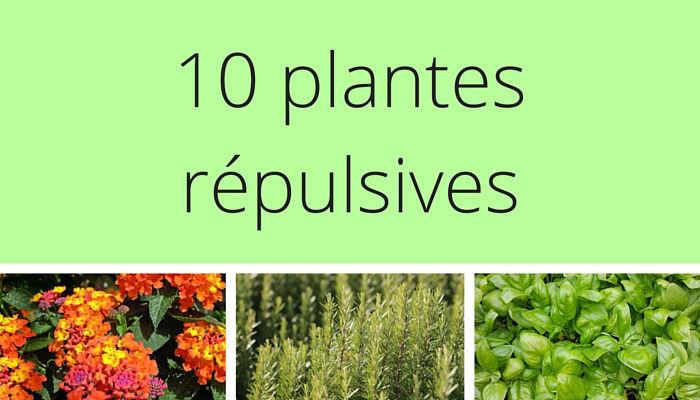 10 plantes r pulsives pour le jardin. Black Bedroom Furniture Sets. Home Design Ideas