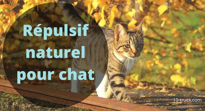 répulsif naturel pour chat