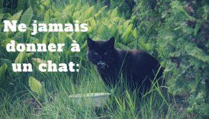 Aliment à ne jamais donner à un chat
