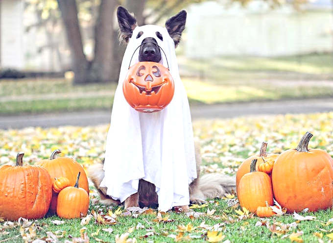 costume de fantôme pour un chien
