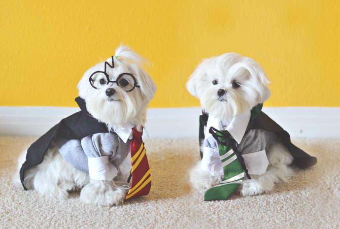 déguisement d'Halloween pour chien Harry Potter