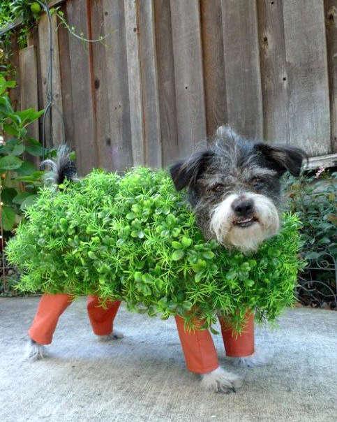 déguisement d'arbuste pour un chien
