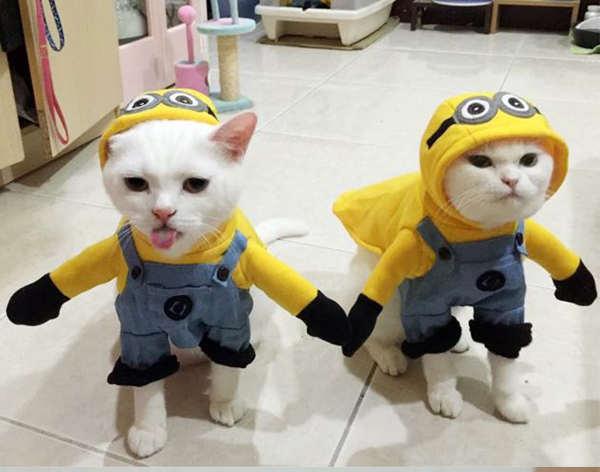 chat déguisé en minions Halloween